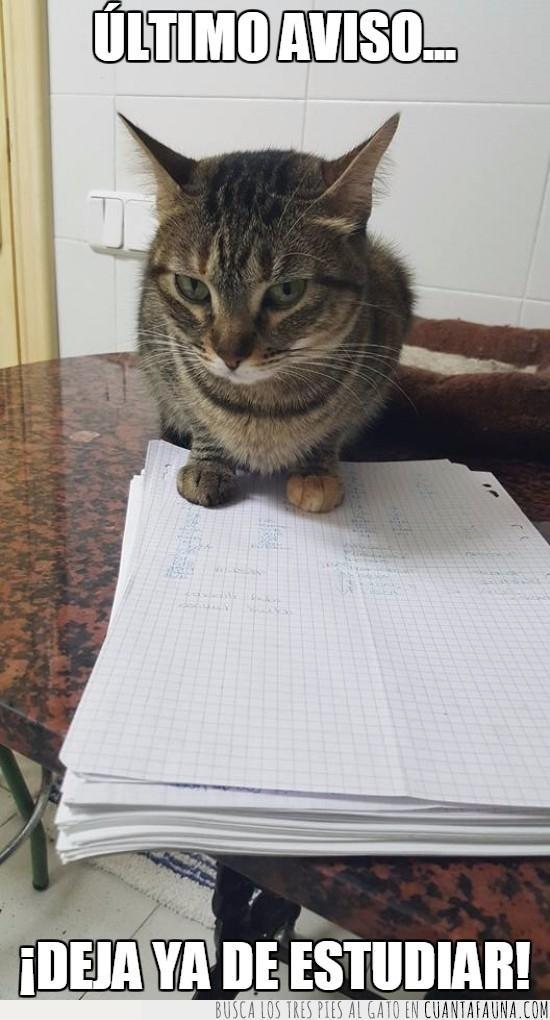 apuntes,encima,estudiar,estudios,gato,impedir,ultimo aviso