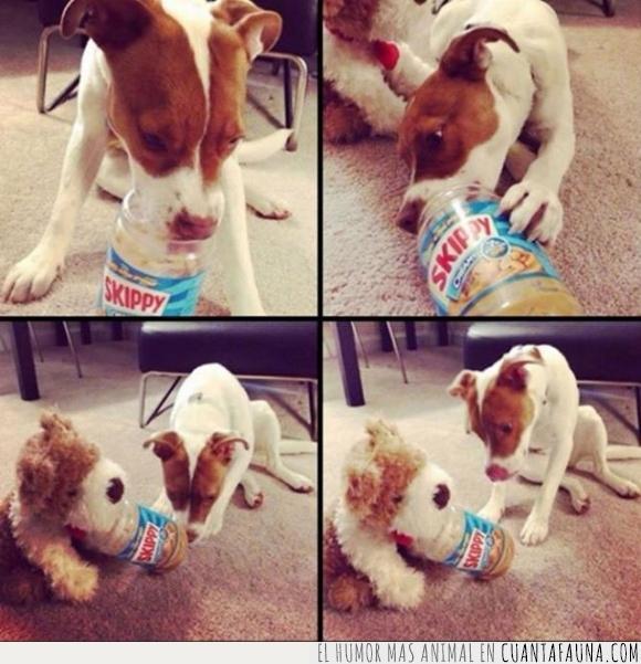 amigo,cacahuete,compartir,juguete,mantequilla,osito,peluche,perrito,perro