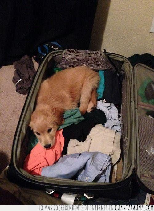 hacer,innecesario,maletas,perro,por si acaso,ropa