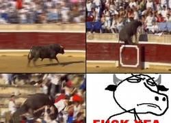 Enlace a Toro Fuck Yeah