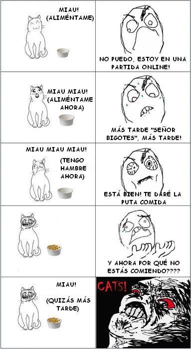 Trollface - Gato Troll