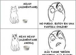 Enlace a Gato Troll