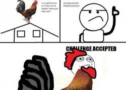 Enlace a ¿Que los gallos no ponen huevos?