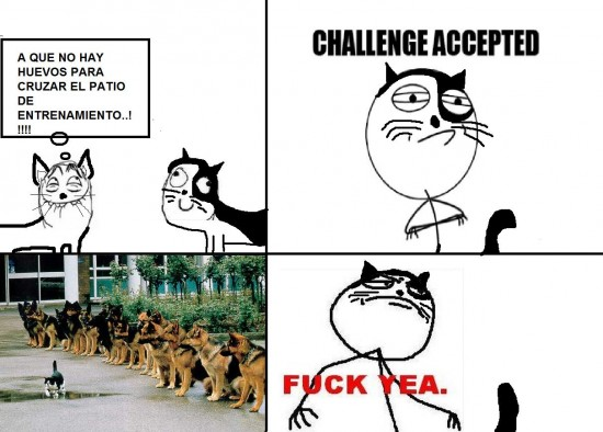 accepted,challenge,gato,yea