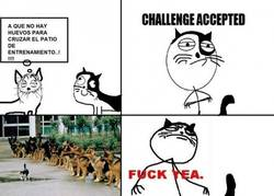 Enlace a Gato valiente