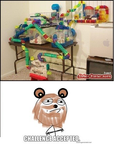 Challenge_accepted - Hamster accepted