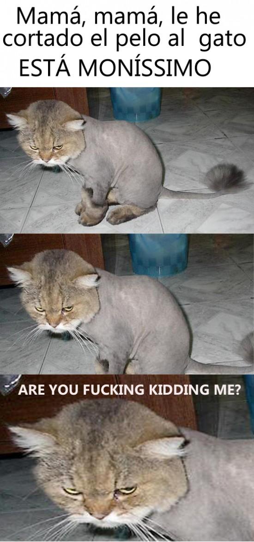 Kidding_me - Peluquería de gatos