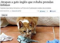 Enlace a Ninja cat