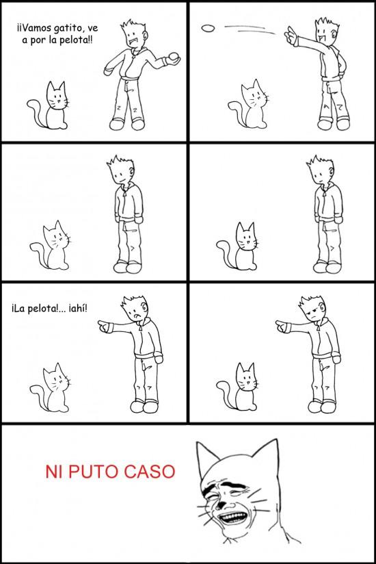 buscar,gato,pelota,yao