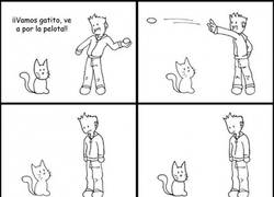 Enlace a Intenta jugar con tu gato