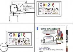 Enlace a Accesorios gatunos