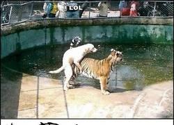 Enlace a Incluso en el mundo animal
