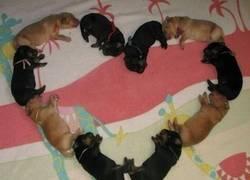 Enlace a Corazon de perro...