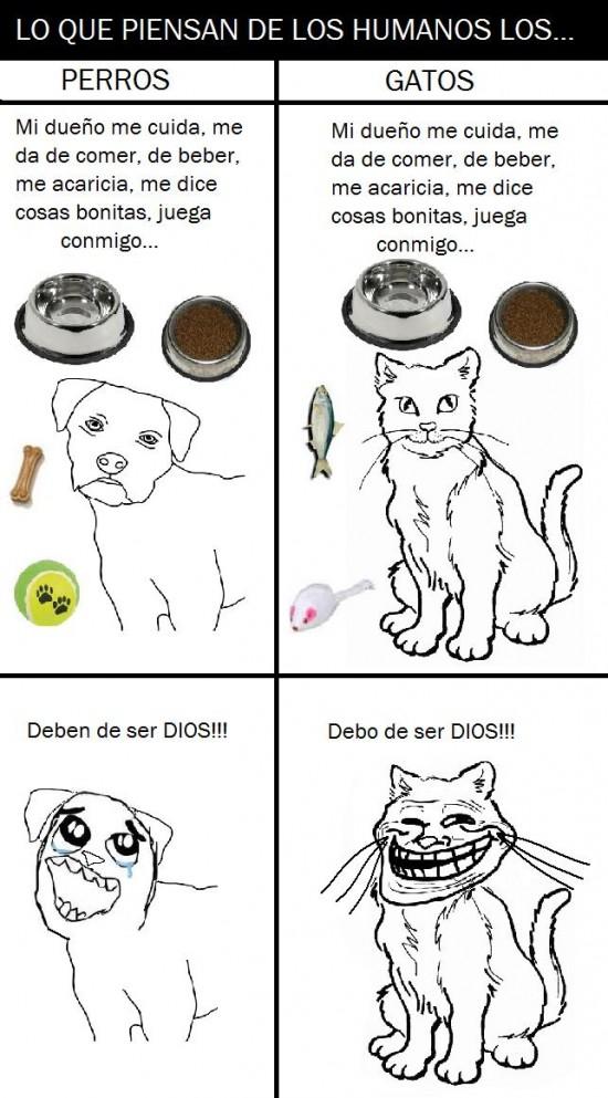 dios,face,gato,humano,mascota,perro,troll,trollface