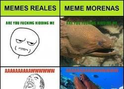 Enlace a ¡Es el turno de las meme morenas!