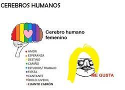 Enlace a Cerebros humanos