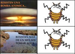 Enlace a Cucarachas resistentes