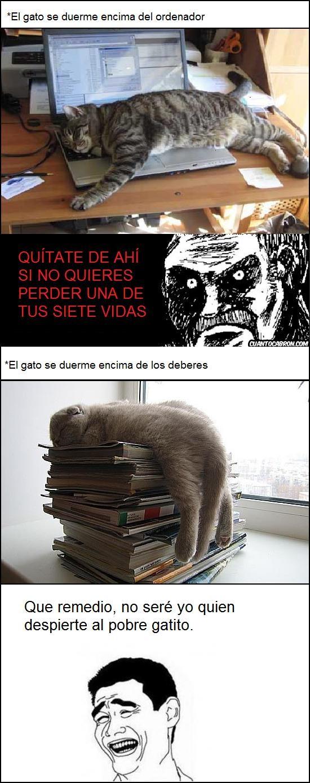 deberes,gato,mirada fija,ordenador,yao ming