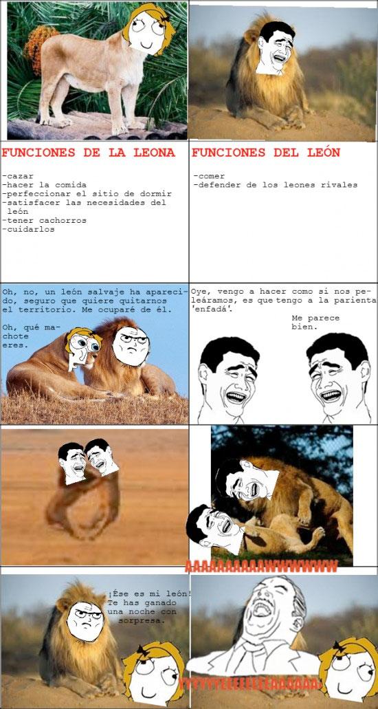 Aww_yea - La jeta del león