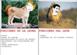 Enlace a La jeta del león