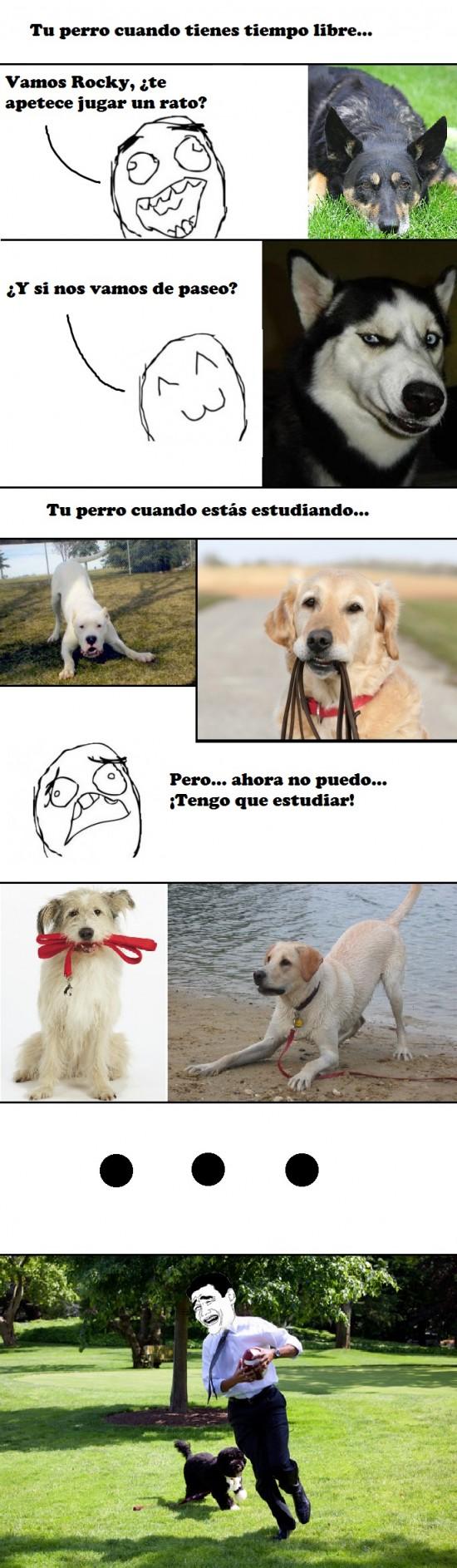 Yao - Psicología canina