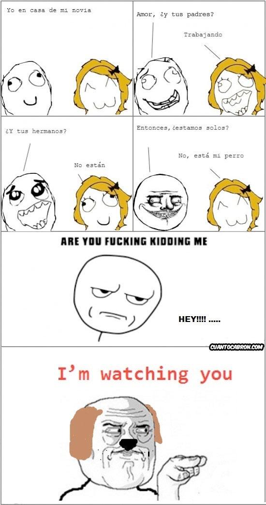 i'm watching you,Perro