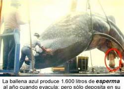 Enlace a Esperma de ballena