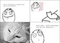 Enlace a Gato vigilante