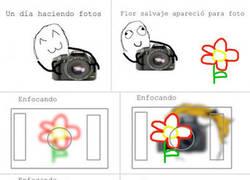 Enlace a Haciendo fotos