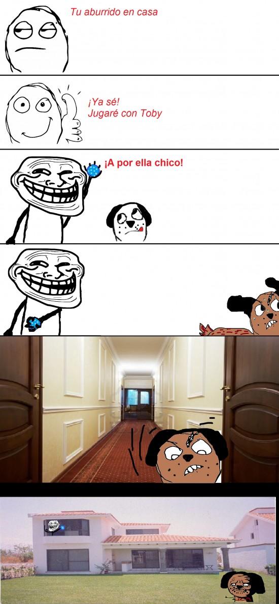 mentira,pelota,perro,troll