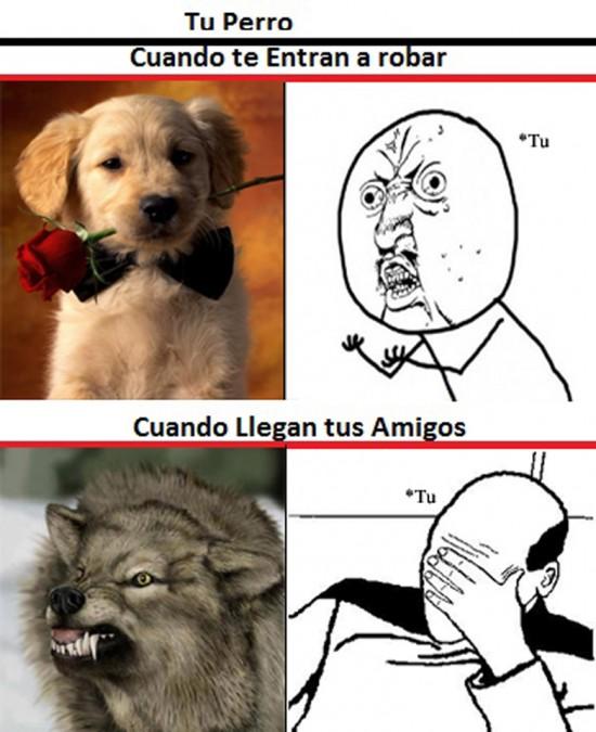 facepalm,perros,Y U NO