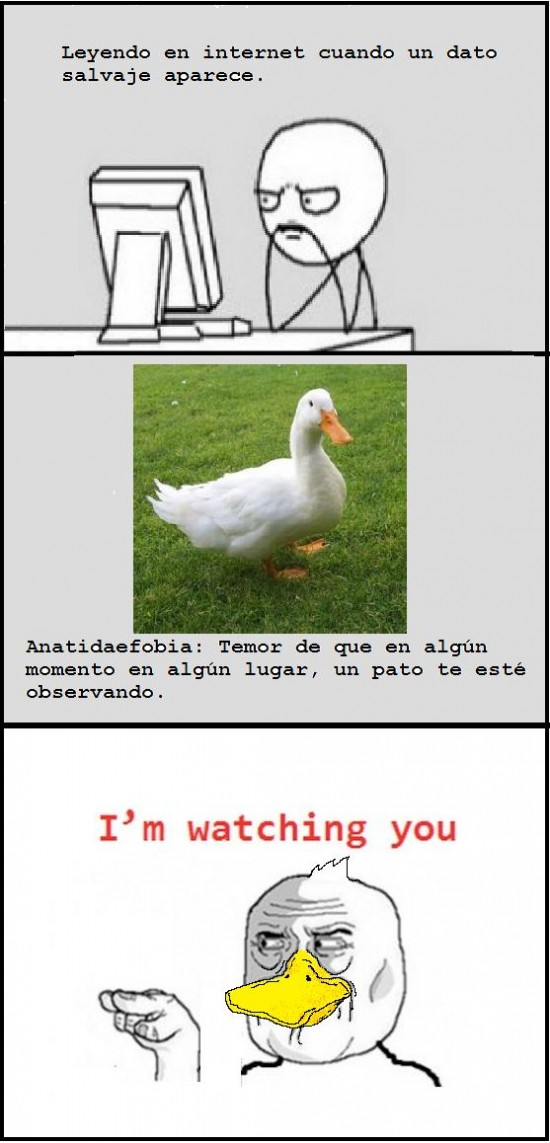 Im_watching_you - Patos