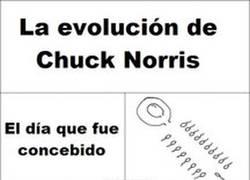 Enlace a La evolución de Chuck Norris