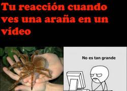 Enlace a Ante las arañas