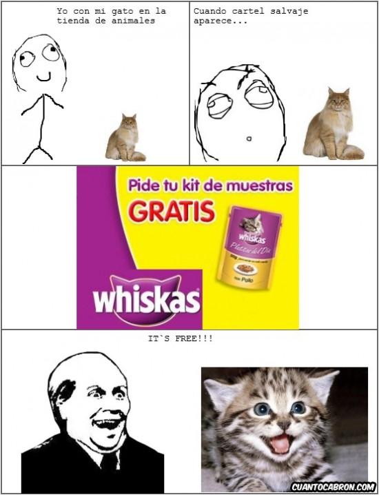 comida de gatos,gatito,It's free