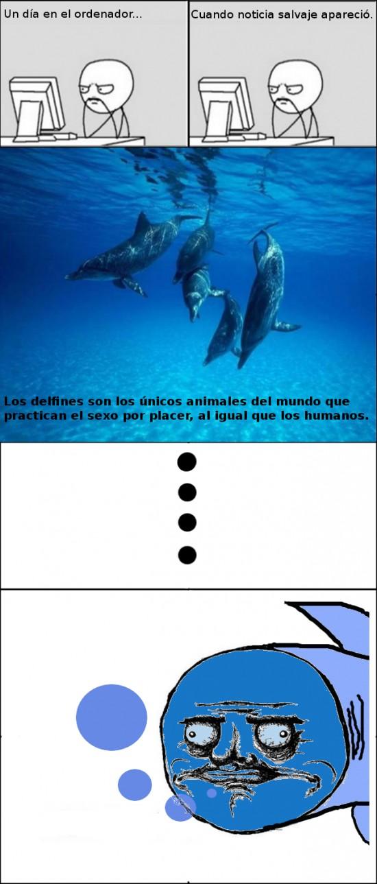 Me_gusta - Delfines, esos seres viciosos