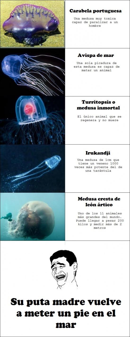 agua,bañarse,destrucción,mar,medusas,muerte,peligrosas
