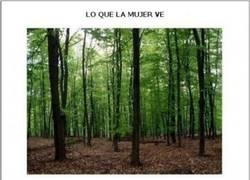 Enlace a Lo que se ve en el bosque