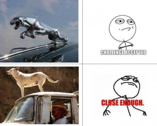 challenge accepted,close enough,coche,furgoneta,jaguar,lujo,perro