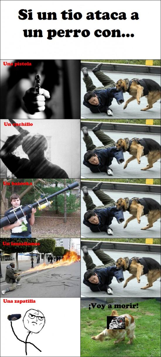 armas,ataque,perro,zapatilla