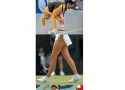 Enlace a Tenis femenino