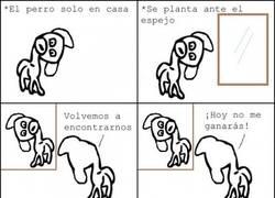 Enlace a Perro + soledad + espejo