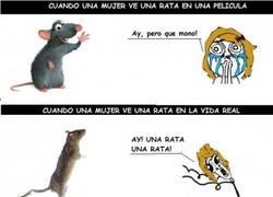 Enlace a Las ratas en la vida real no son tan monas