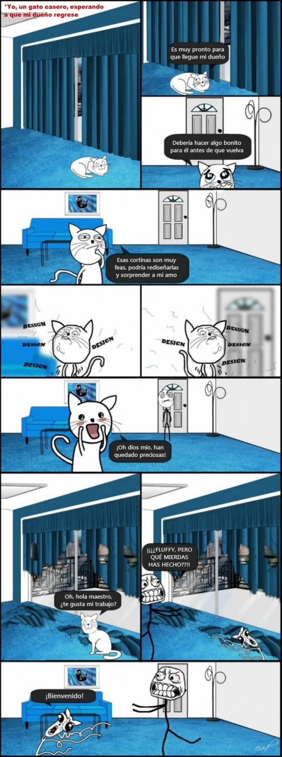 Omg_run - Gatos y su lógica