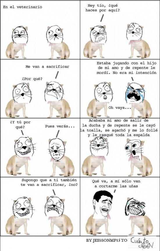 amo,perros,rasguñar,sacrificar,veterinaria,yao ming