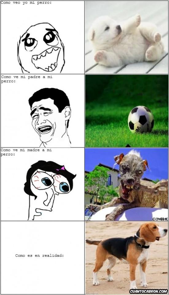 Yao - El perro