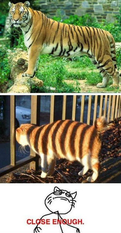 Challenge_accepted - Feel like a tigre