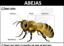 Enlace a Las abejas