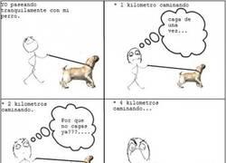 Enlace a Paseando al perro