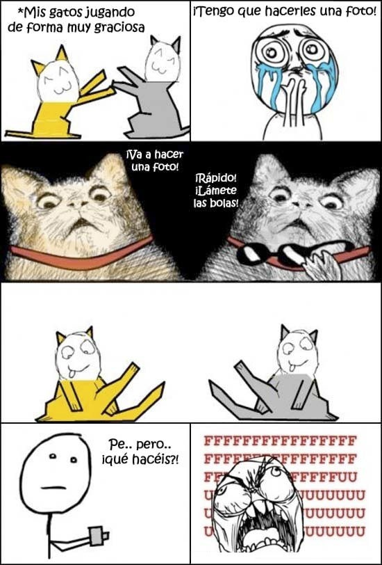 Pokerface - Sólo puede ser obra de gatos